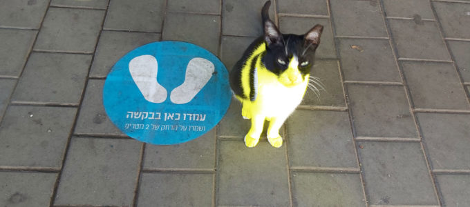 חתול מציית להוראות ריחוק חברתי 🖼️ עידו קינן